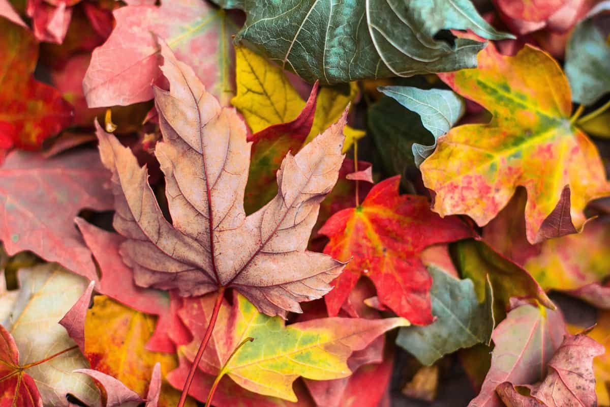 Räumpflicht im Herbst